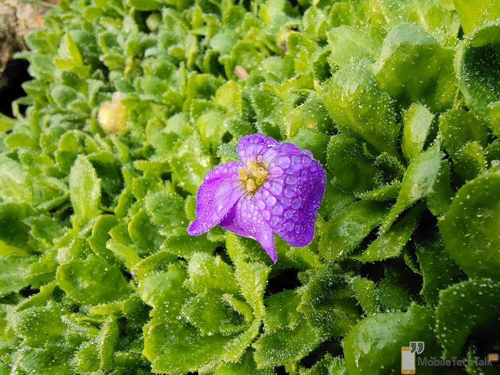 Purple flower photo taken on the Vivo X51 5G